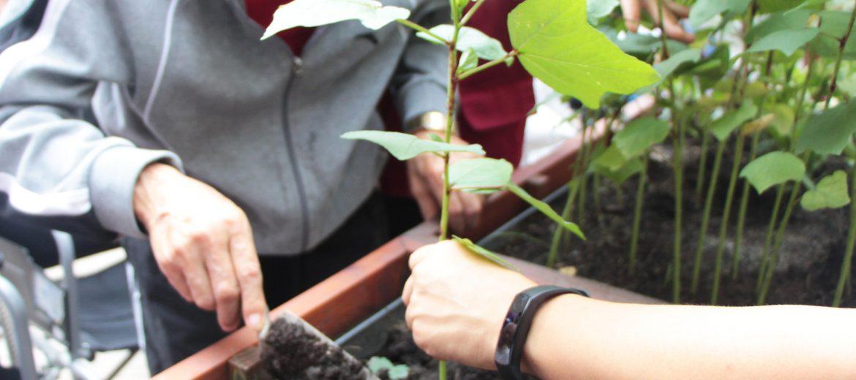 以平和感受生活之美:园艺疗法与减压活动